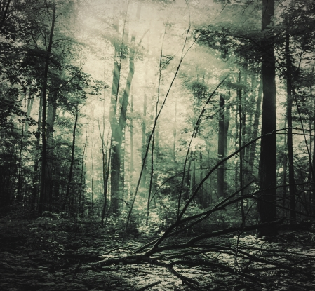 ForestofDean2