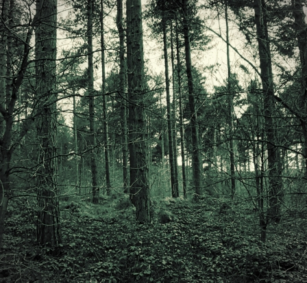 ForestTreesBW